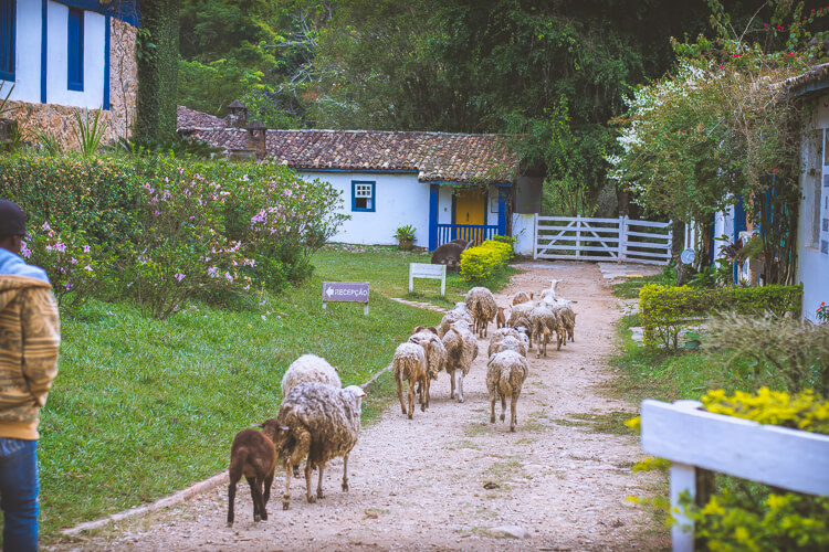 hotel-fazenda-fonte-limpa (2 of 45)
